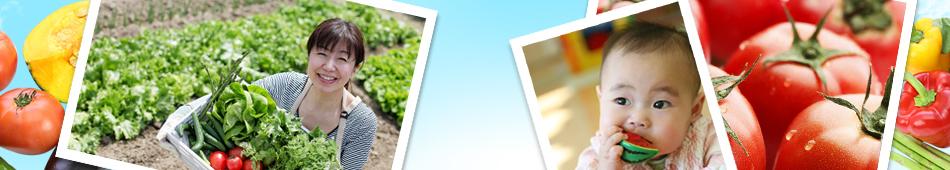 緑資源の保護と、都市農業生産者の農業収入の確保、ならびに活性化による生産緑地の保護にも寄与すべく活動しています。