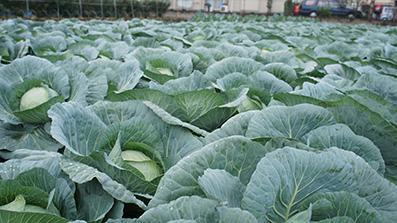 東京野菜設立趣意書イメージ画像